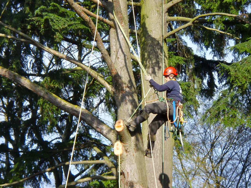 Tree Care Services - Missoula Tree Preservation Certified Arborist